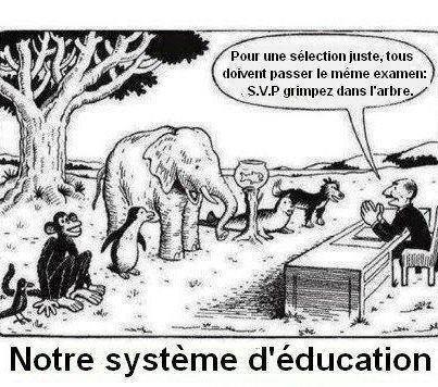 """""""Tout le monde est un génie. Mais si vous jugez un poisson sur ses capacités à grimper à un arbre, il passera sa vie à croire qu'il est stupide"""" - Albert Einstein"""