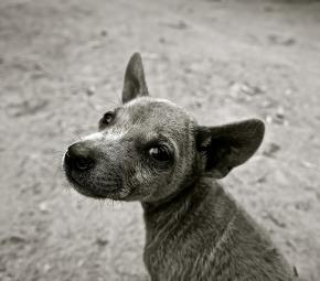 esukudu-chien